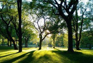 木漏れ日の差す公園